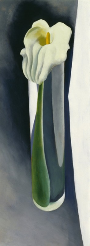 Georgia O'Keeffe – Calla Lily in Tall Glass No 2 - wf16972